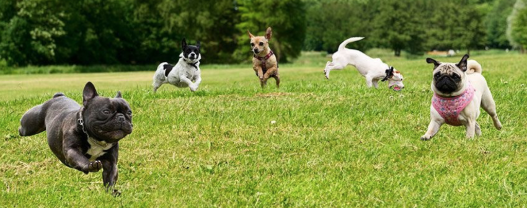 photo of dogs playing